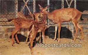 Woodland Park Zoo, Seattle, Washington, USA Native Deer Unused