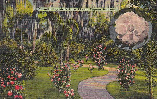 Camellia Japonica's Lane At Cypress Gardens Florida