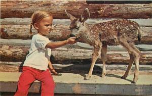 Bradshaw Buffalo Park Flagstaff Arizona Children's Amusement 1950s Postcard 3402