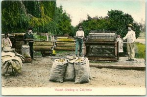 California Agriculture Postcard Walnut Grading in Calif. HAND-COLORED Rieder
