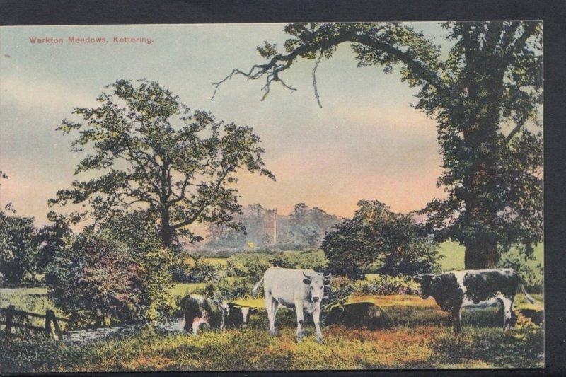 Northamptonshire Postcard - Warkton Meadows, Kettering   DC1263