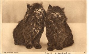 Cats. Tow heavenly twinsNice old vintage english postcard