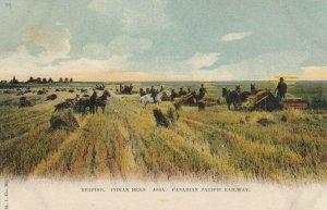 INDIAN HEAD , Saskatchewan, 1900-10s ; Reaping #3
