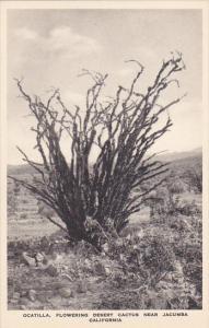 Ocatilla Flowering Desert Cactus Near Jacumba California Albertype