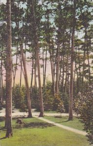 Minnesota Itasca State Park The Tall Sentinals Albertype