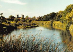 New Postcard Wimborne Minster, Dorset, seen from the Banks of the River Stour