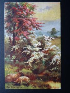 Spring Blossoms THE HAWTHORN - Harry Payne c1908 Postcard Raphael Tuck 9550