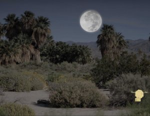 Set of 6 Fine Art Postcard Desert Night Scene Coachella Wildlife