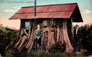 Washington Cabin In Cedar Stump