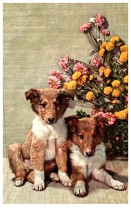 Dog ,Puppies front of flowers