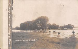 Grundy Center Iowa~In Pastures Green Cows in Black Hawk Creek~1905 Frost RPPC