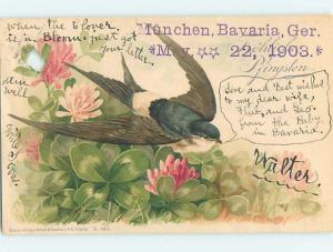 1903 foreign BEAUTIFUL LARGE BIRD - FROM MUNCHEN MUNICH GERMANY HJ4417