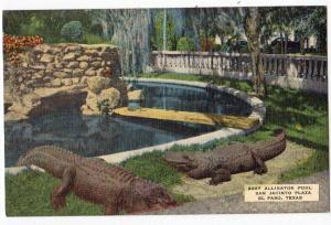 San Jacinto Park, Alligator Pool, El Paso TX
