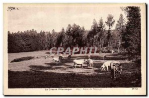 Old Postcard Folklore Creuse Scene Grazing Cows