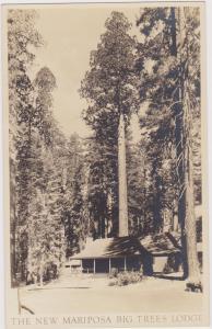 RP: The New Mariposa Big Trees Lodge , California , 20-30s