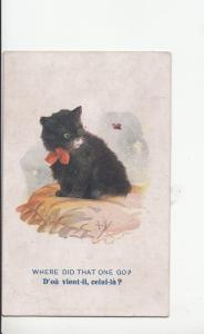 B80546 where did that one go chaising a butterfly  paint cat  front/back image