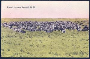 Rounding up the Cattle Herd Roswell NM unused c1910's
