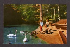 NH Polar Caves RUMNEY NEW HAMPSHIRE Postcard Swan Geese