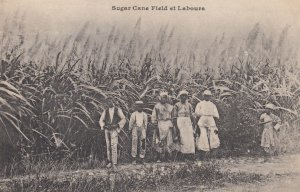 Martinique , Sugar Cane Field et Labours , 00-10s