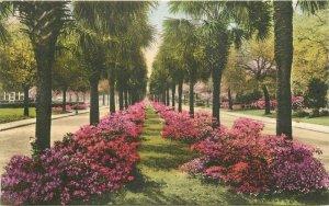 Savannah Georgia Victory 1920s hand colored Albertype Tulia's Postcard 21-6008