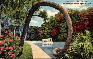 Florida Silver Springs The Horse Shoe Palm 1950 Curteich