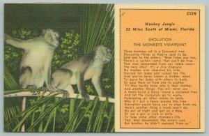 Miami Florida~Two Monkeys On Tree Limb~Vintage Postcard