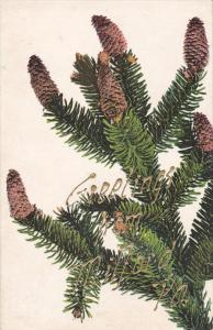 Pine Branch, Greetings from MILFORD, Pennsylvania, 00-10s