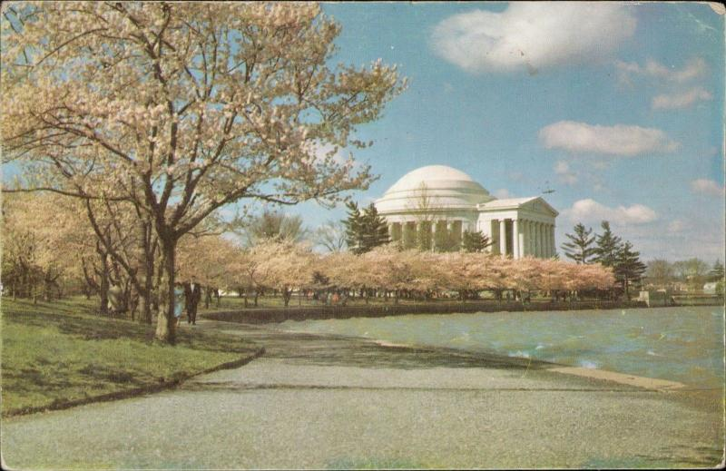 Jefferson Memorial Cherry trees bloom Virginia