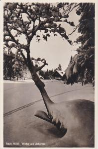 RP, Bayrm Wald, Winter Am Arbersee, Germany, 1920-1940s