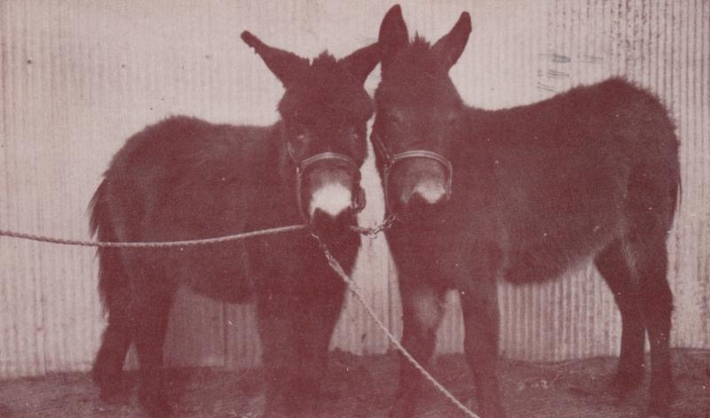 Donkey , Twin Mules Scotch & Soda , NORTH BEND , Nebraska , 1968