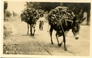 Mexico - C. Valles, S.L.P. Burros Loaded with Firewood.   *RPPC