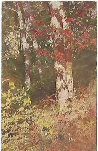 Autumn Leaves Birch Railroad Cancellation 1908 Vintage Postcard American Art