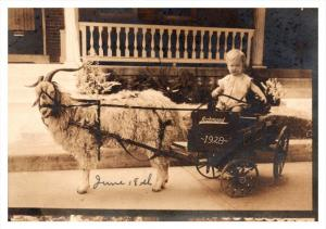 19820  Baby in cary pulled by Sheep 1928 RPC