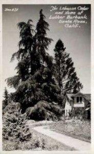 Real Photo, The Lebanon Cedar - Santa Rosa, CA