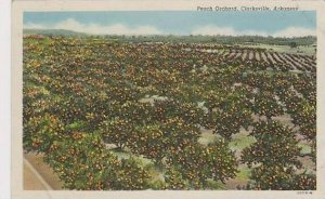 Arkansas Clarksville Peach Orchard