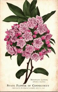 Mountain Laurel, State Flower of CT Vintage Postcard Q26