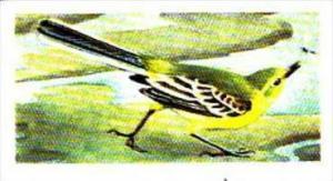 Brooke Bond Tea Trade Card Wild Birds In Britain No 10 Redstart