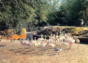 BT9275 animals animaux flamingos