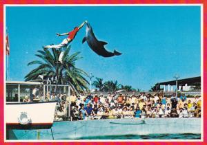 Jumping Porpoise Miami Seaquarium Miami Florida