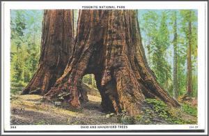 California Yosemite National Park Postcard - [CA-157]