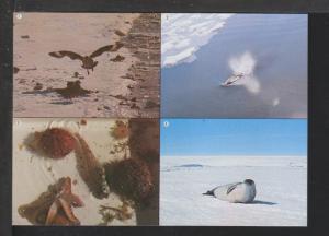 South Pole Animals Postcard