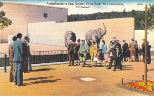 Fleishhacker's Zoo Golden Gate Park San Francisco, CA Elephants Postcard c1940s