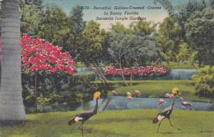 Florida Sarasota Beautiful Golden Crested Cranes In Sunny Florida Sarasota Ju...