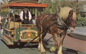 Horse Drawn Streetcar Walt Disney World Orlando Florida