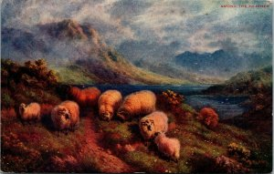 Vtg 1910s Sheep Among the Heather from the painting by JW Crane Art Postcard