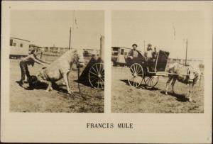 Circus Related? Francis the Mule Sitting on Man Uncle Ezra & Topsy RPPC