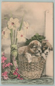 Little Brown n White Puppies Look Out From Tall Wicker Basket~White Flowers~Vase