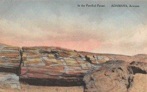 Petrified Forest ADAMANA, AZ Hand-Colored c1910s Albertype Vintage Postcard
