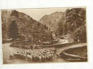 RP,Aberglaslyn Pass,Sheep Herder With Sheep,UK,00-10s
