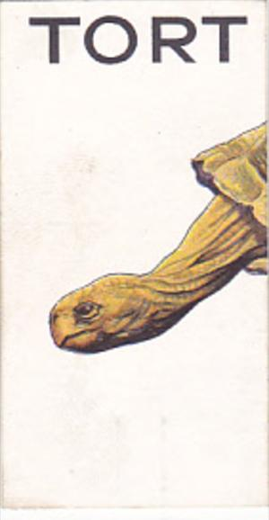 Cigarette Card Wills 1934 Animalloys No 37 TORT of TORTOISE